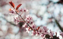 Albero in fioritura fotografie stock