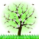 Albero floreale della bella sorgente Fotografie Stock Libere da Diritti