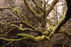 Albero in foresta 2 Fotografia Stock