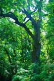 Albero in foresta fotografie stock