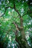 Albero in foresta immagine stock