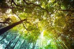 Albero in foresta fotografia stock
