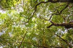 Albero in foresta immagini stock