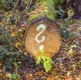 Albero in foresta con il punto interrogativo dipinto Immagini Stock