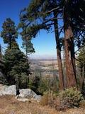 Albero in foresta con la vista della valle fotografie stock libere da diritti