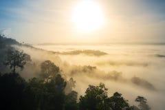 Albero in foresta e nebbia alla mattina Fotografia Stock Libera da Diritti