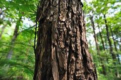 Albero in foresta verde Immagini Stock