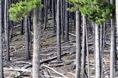 Albero forestale Fotografia Stock