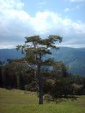 albero forestale Immagine Stock