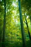 Albero forestale coperto di muschio Fotografia Stock