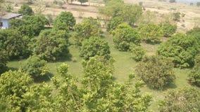 Albero forestale di Lovly in India Immagine Stock