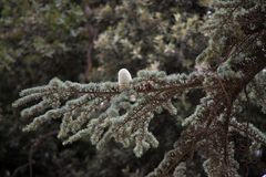 Albero forestale, foresta, albero, natura, paesaggio Fotografia Stock Libera da Diritti