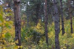 Albero forestale, foresta, albero, natura, paesaggio Immagine Stock