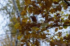 Albero forestale, foresta, albero, natura, paesaggio Fotografia Stock