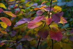 Albero forestale, foresta, albero, natura, paesaggio Fotografie Stock