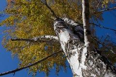 Albero forestale, foresta, albero, natura, paesaggio Immagini Stock