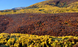 Albero forestale variopinto di favola di autunno Fotografie Stock