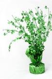 Albero fortunato (acetosella per il giorno della st Patrick) Fotografie Stock