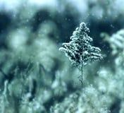 Albero freddo della menta Fotografia Stock