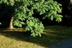 albero frondoso immagine stock