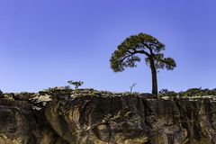Albero fuori dell'orlo del sud di Grand Canyon e del fiume Colorado Immagine Stock Libera da Diritti