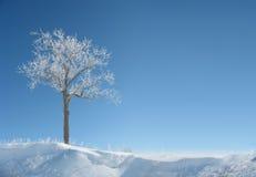 Albero ghiacciato Fotografia Stock