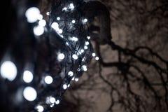 albero, ghirlanda, notte, inverno, natale fotografia stock