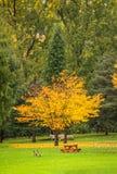 Albero giallo luminoso in un parco il giorno nuvoloso di autunno Fotografia Stock Libera da Diritti