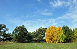 Albero giallo solo di autunno in tempo soleggiato con le nuvole fotografia stock libera da diritti