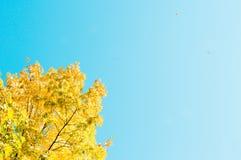 Albero giallo sul cielo fotografia stock