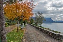 Albero giallo sul lago Lemano a Montreux, Svizzera Fotografia Stock Libera da Diritti