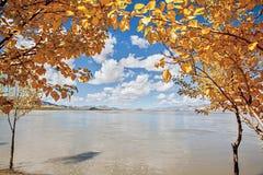 Albero giallo vicino a Lhasa River Fotografie Stock