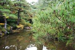 Albero giapponese Fotografia Stock