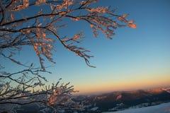 Albero glassato contro il tramonto della montagna Fotografia Stock