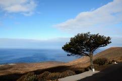 Albero Gnarled del ginepro a forma di dal vento Fotografie Stock Libere da Diritti