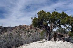 Albero Gnarled nel paesaggio desolato fotografie stock libere da diritti