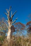albero guasto immagini stock libere da diritti