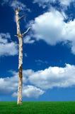 albero guasto fotografie stock