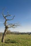 Albero guasto Fotografia Stock