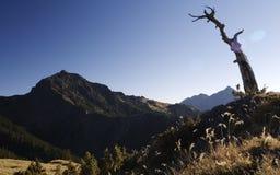 Albero guasto che guarda alta montagna Fotografie Stock