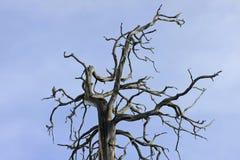 Albero guasto con l'uccello Fotografia Stock