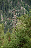Albero guasto in foresta Fotografie Stock
