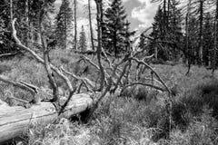 Albero guasto in foresta Fotografia Stock