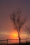 Albero guasto nel tramonto Fotografie Stock