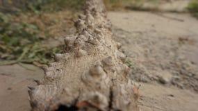 Albero guasto nella foresta Fotografia Stock Libera da Diritti
