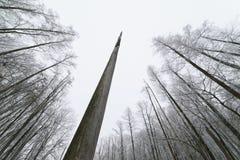 Albero guasto nella foresta Immagini Stock Libere da Diritti