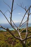 Albero guasto su una collina sopra la laguna della Tahiti immagine stock libera da diritti