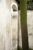 Albero in iarda Fotografia Stock Libera da Diritti