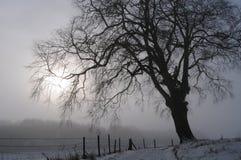 Albero il giorno dello Snowy Fotografia Stock
