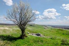 Albero in il paesaggio di primavera Immagini Stock Libere da Diritti